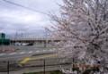 桜並木向こうを、新幹線E7系新型車両が通過…。(26.4.21)