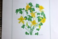 6月のカレンダーは、「オダマキ(苧環)」の花。(26.6.1)