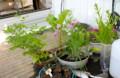 軽トラの荷台に、植栽するポット苗.(26.6.2)