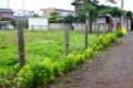 またまた野草が伸び始めた「更地」。(26.7.14)