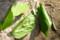 葉の中には、幼虫が。(26.8.22)