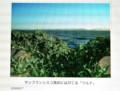 サンフランシスコ湾岸の岩場に蔓延る「ツルナ(蔓菜)」