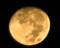「十三夜」の残月。(26.10.7)(3:20)