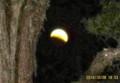 イチイの枝の間から、月食を観望。(