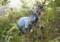 雑木林で、苗木取り。(26.10.27)