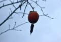 葉の落ちた木に、ぽつんと「守り柿」。(26.11.12)