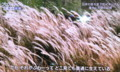 テレビ「プロフェッショナル」より(26.12.2)