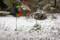 お昼過ぎ、降り始めた雪。(26.12.16)(12:47)