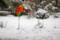 降り続く雪。(26.12.16)(14:28)