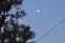 東の空に、「霜月十一日」のお月さまが。(27.1.1)(16:25)