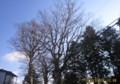 郷社・若宮神社の冬木立。(27.1.5)