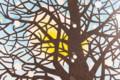 『モチモチの木』の挿絵、「豆太の月」。(27.1.10)