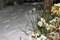 厳寒先に残る、昨夜の積雪。(27.1.12)(6:00)