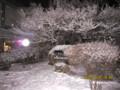 雪を被る、学校のシンボル「カエデ(楓)の木。(27.1.30)