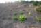 地面が乾いた「賢治ガーデン」。(27.4.25)