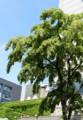 「松本城・天守六階」から、美ヶ原方面を見る。(27.6.11)