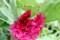 花びらに乗って、アマガエルが一休み…。(