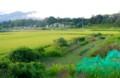 稲田の向こう、「台風一過の浅間山」。(27.9.9)