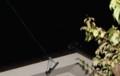 金星・木星の接近。(27.10.26)(4:31)