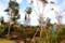 「賢治ガーデン」、樹木の整枝作業。(27.10.27)
