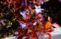 秋の日が降り注ぐ「リンドウ(竜胆)」「コナラ(小楢)」。(27.10.29)
