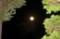 空高く昇った「長月十七日」の月、「立待月」。(27.10.29)(20:58)