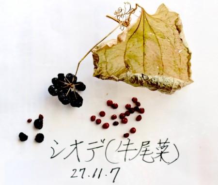 f:id:yatsugatake:20151107105641j:image