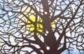 「霜月二十日」の月。『モチモチの木』より。