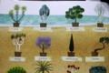 木を植えたケイトさん(絵本より)