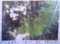真楽寺の「リギダ松」