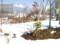 春を待つ「賢治ガーデン」。(28.1.28)