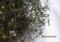 雪を被った、軒下の花々。(28.1.130)
