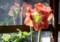 朝日が「アマリリス」の花を透かして…。(28.2.16)