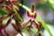 「蜜蜂ラン」の花。(28.4)