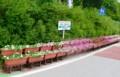 岩村田小学校前の「ペチュニア」プランター(上の城区)。(28.7.8)