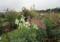 賑やかに咲いた、「金魚草」。(28.8.4)