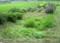 第二賢治ガーデン・「下の田んぼに居ります」(28.8.4)