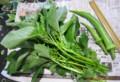 「モロヘイヤ」、「島オクラ」は、旬の野菜。(28.8.8)