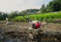 秋野菜作りのために、草退治…。(28.8.8)