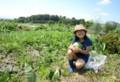 西瓜畑で、「小玉スイカ」の収穫。(28.8.12)