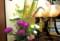 「送り盆」、盆棚の片付け。(28.8.16)
