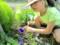 美しい「アサガオ(朝顔)」の花に、テープで目印。(28.8.16)
