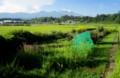 浅間山は、白い綿帽子、稲穂が黄色く…。(28.8.19)