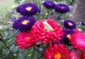 雨模様を感じてか、花に乗る蛙。(28.8.20)