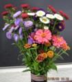 「アスター」と「百日草」を挿した花瓶。(28.8.20)