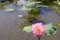 水面に花びらが…、「散華」を彷彿…。(28.8.25)