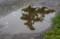 水溜りに「リギダ松」が映って…。(28.8.27)