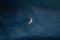 黒雲の間に、「八月五日」のお月さま。(28.9.5)(18:26)