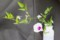 仙人草の生花。(28.9.6)