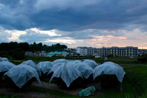 西空には、夕焼け雲が…。(28.9.6)